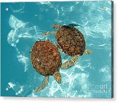 Turtle Dance Acrylic Print by Irina Davis