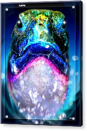 Acrylic Print featuring the digital art Turtle by Daniel Janda