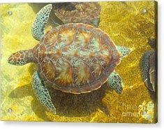 Turtle Day Acrylic Print