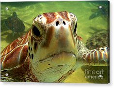 Turtle Face Acrylic Print by Carey Chen