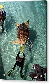 Turtle - National Aquarium In Baltimore Md - 121214 Acrylic Print by DC Photographer