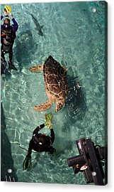 Turtle - National Aquarium In Baltimore Md - 121217 Acrylic Print by DC Photographer