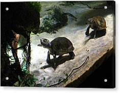 Turtle - National Aquarium In Baltimore Md - 121218 Acrylic Print by DC Photographer