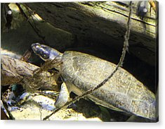 Turtle - National Aquarium In Baltimore Md - 121220 Acrylic Print by DC Photographer