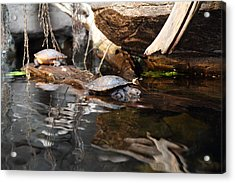 Turtle - National Aquarium In Baltimore Md - 121222 Acrylic Print by DC Photographer