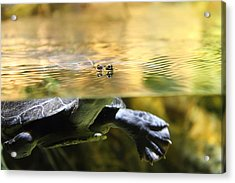Turtle - National Aquarium In Baltimore Md - 12124 Acrylic Print by DC Photographer