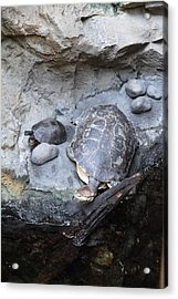 Turtle - National Aquarium In Baltimore Md - 12127 Acrylic Print by DC Photographer