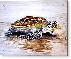 Turtle On The Beach Acrylic Print