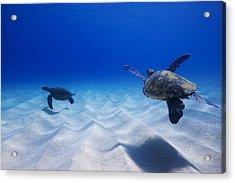 Turtle Pair Acrylic Print