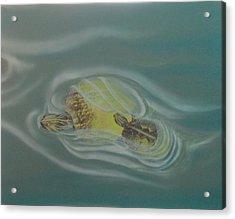 Turtle Pond Iv Acrylic Print