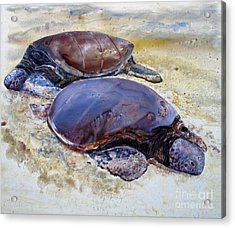 Turtle R And R Acrylic Print by Louise Peardon