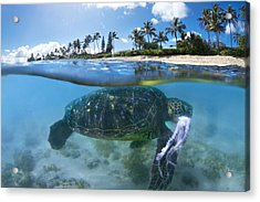 Turtle Snack Acrylic Print by Sean Davey