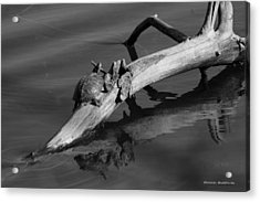 Acrylic Print featuring the photograph Turtle Sun Bw by Tannis  Baldwin