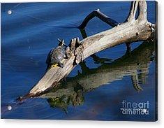 Turtle Sun Acrylic Print by Tannis  Baldwin