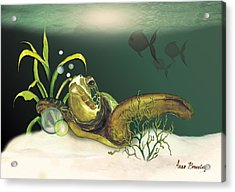 Turtle Swimming Over Reef Acrylic Print by Anne Beverley-Stamps