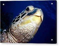 Turtles 1 Acrylic Print by Dawn Eshelman