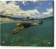 Turtles Need Air Too Acrylic Print by Brad Scott