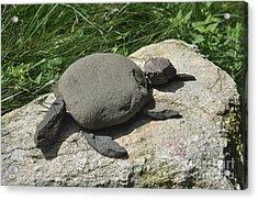 Turtle's Rock Acrylic Print