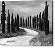 Acrylic Print featuring the photograph Tuscan Cedars by Hugh Smith