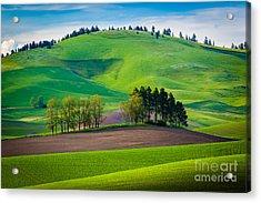 Tuscan Palouse Acrylic Print by Inge Johnsson