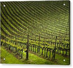 Tuscan Vineyard Series 1 Acrylic Print