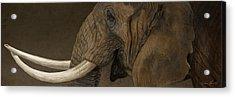 Tusker Acrylic Print by Aaron Blaise