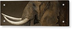 Tusker Acrylic Print