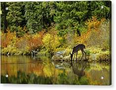 Tuti Fruti Colors And Eye Candy Reflections Acrylic Print by Diane Schuster