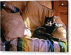 Tuxedo Cat Sitting On Sofa In San Acrylic Print