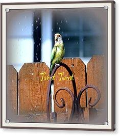 Tweet Tweet Acrylic Print by Kay Novy