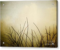 Twigs Acrylic Print by Darla Wood