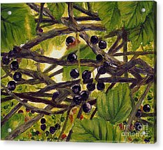 Twigs Leaves And Wild Berries Acrylic Print