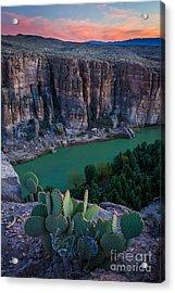 Twilight Cactus Acrylic Print