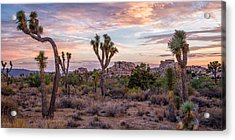 Twilight Comes To Joshua Tree Acrylic Print by Peter Tellone