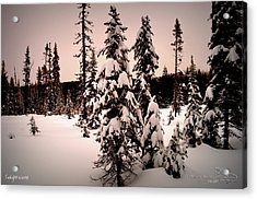 Twilightwinter Acrylic Print by Guy Hoffman