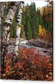 Twin Aspens Acrylic Print by James Peterson