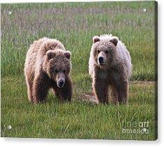 Twin Bear Cubs Acrylic Print