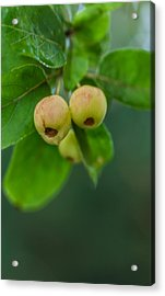 Acrylic Print featuring the photograph Twin Berries by Jacqui Boonstra