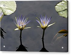 Twin Blue Egyptian Lotus Waterlilies And Dragonfly Acrylic Print by Byron Varvarigos