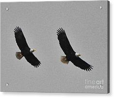 Twin Eagles In Flight Acrylic Print