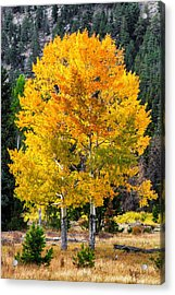 Twin Fall Trees Acrylic Print