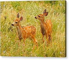 Twin Fawns Acrylic Print