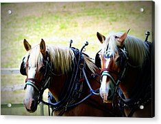 Acrylic Print featuring the photograph Twin Horses by Cathy Shiflett