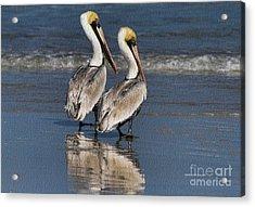 Twin Pelicans Acrylic Print by Deborah Benoit