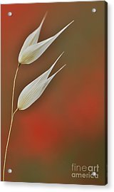 Acrylic Print featuring the photograph Twin by Simona Ghidini