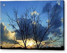 Twin Trees Acrylic Print