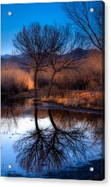 Acrylic Print featuring the photograph Twin Trees by Kristal Kraft