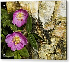 Twin Wild Roses Acrylic Print