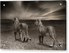 Acrylic Print featuring the photograph Twins 2 by Christine Sponchia