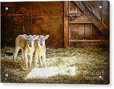 Twins Acrylic Print by Alana Ranney
